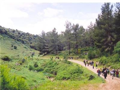 שמורת יער ברעם